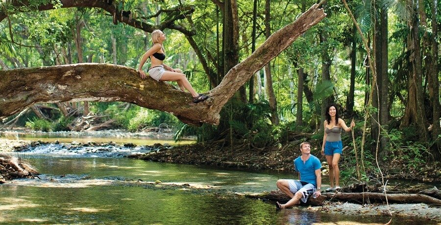 Cairns Tour Package Daintree Rainforest I