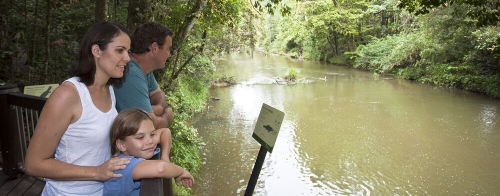 Platypus Spotting in the Atherton Tablelands