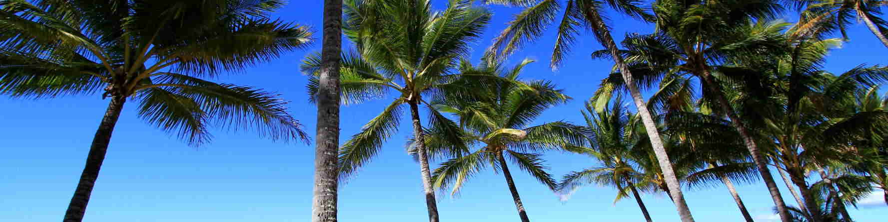 Where to stay in Palm Cove?