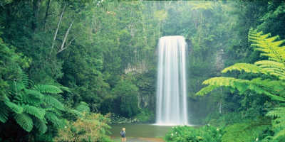1 Day Atherton Tablelands Tour $55