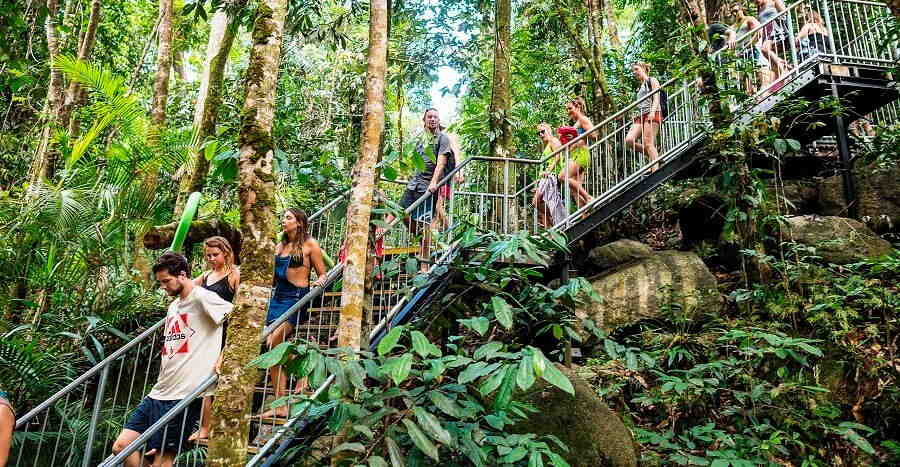 atherton tablelands rainforest walk