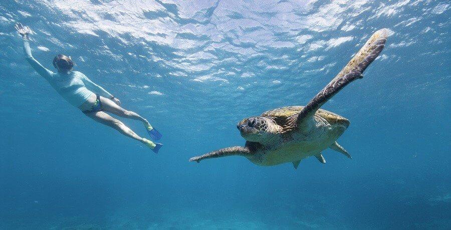 green island turtle
